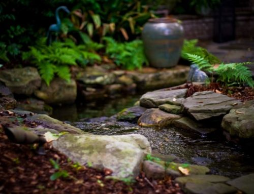 Make Your Pool & Landscape Pop with Water Features
