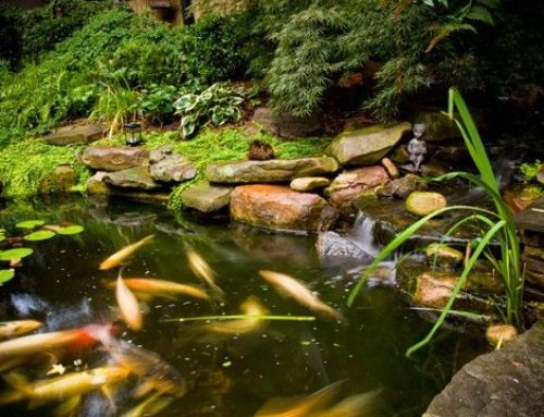 HOW TO KEEP ALGAE FROM OVERTAKING YOUR POND
