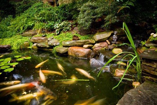 Landscape Design Charlotte Koi Pond
