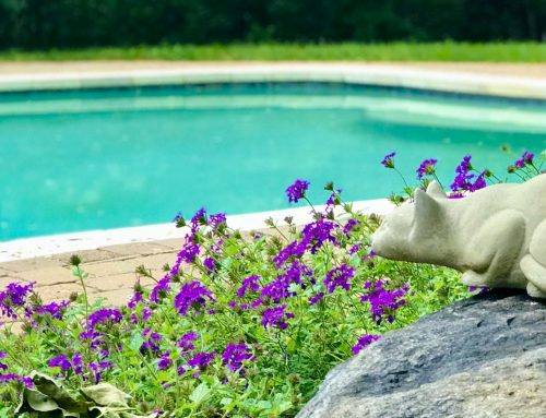 Plant Ahead for Color Around Your Pool